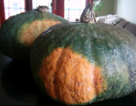 Post image for 3 Highly Addictive Squash Recipes
