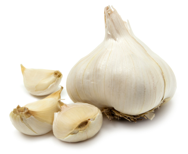 Post image for Garlic: The Natural Antibiotic
