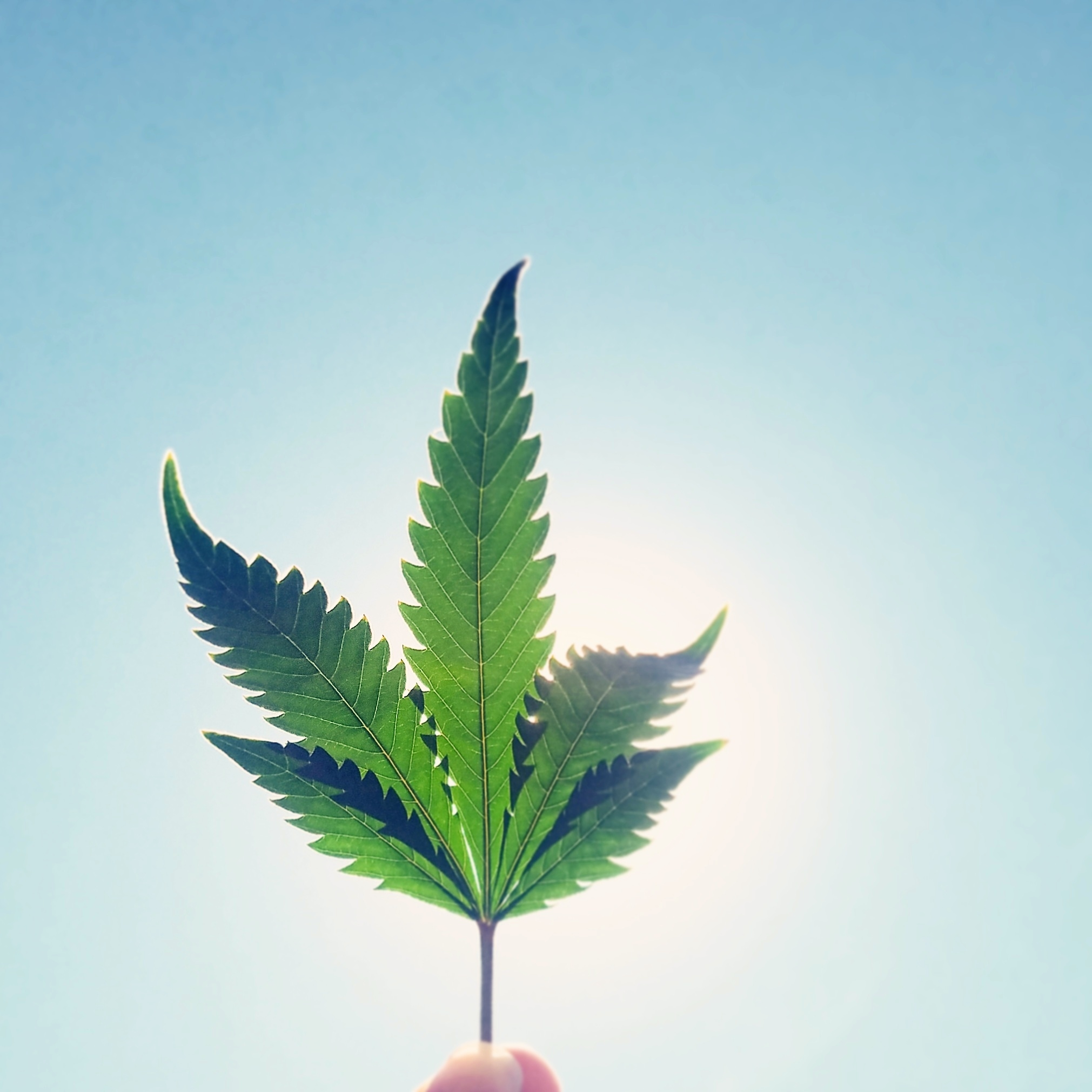 Lets Talk About That New Hope Drug For >> Let S Talk About Cannabis Healthy Crush