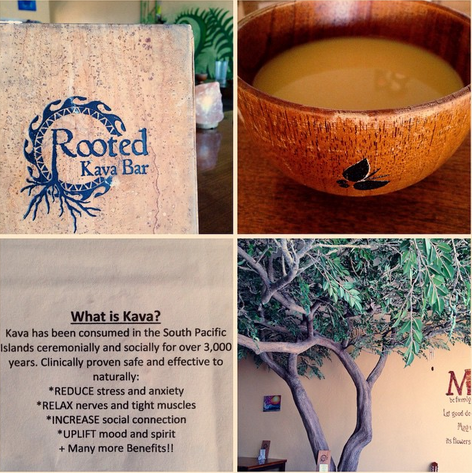Is Kava The New Alcohol? - Healthy Crush